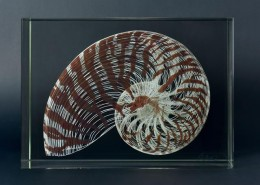 Michal Macku - LII   Nautilus shell, white lines with brown structures; 33cm x 24cm x 14cm